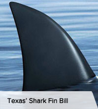 VegNews.SharkFin