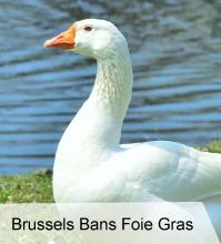 VegNews.BrusselsFoieGrasBan