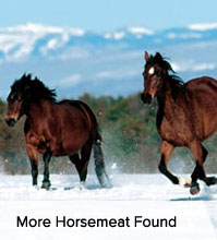 VegNews.Horsemeat.VNL