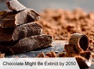 VegNews.ChocolateMightBeExtinctby2050