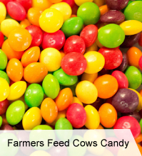 VegNews.FarmersFeedCowsCandy