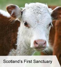 VegNews.ScotlandsFirstSanctuary