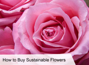 VegNews.HowtoBuySustainableFlowers