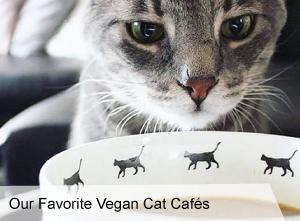 VegNews.OurFavoriteVeganCatCafes