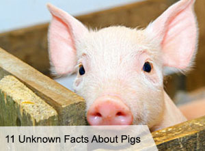 VegNews.Pig